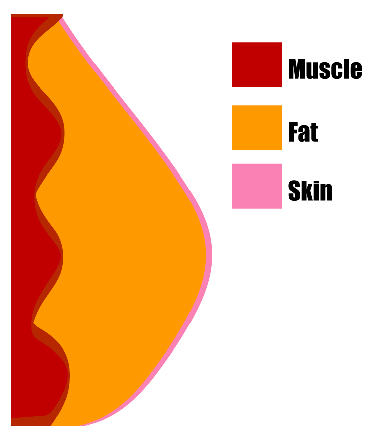 Body Fat Diagram