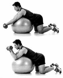 bicepcurls fitball The Best workout to Sculpt & Tone your Arms